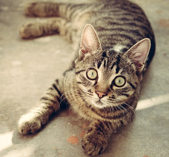 All About The Mackerel Tabby Cat Pattern