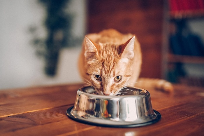Orange Tabby Cat Loves Food