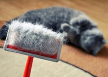 Cat Dandruff - What Is It, Causes, and Skincare Tips