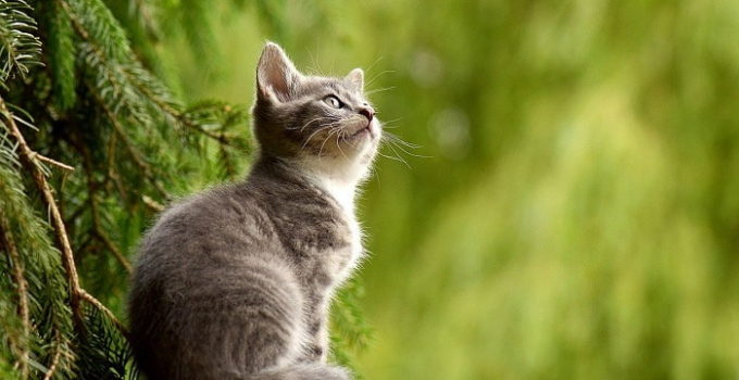 How Long Do Cats Live - Lifespan of Indoor and Outdoor Cat